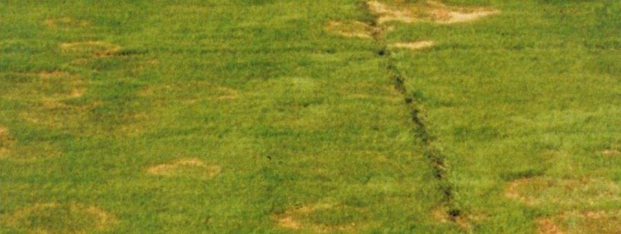 hellgrünes gras im rasen