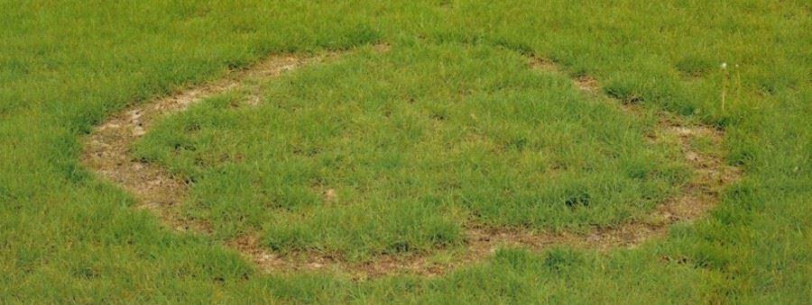 Hexenkreise Im Rasen